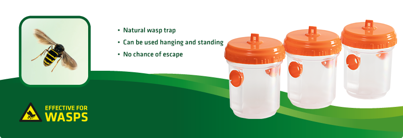 Wasp Trap, Set of 3